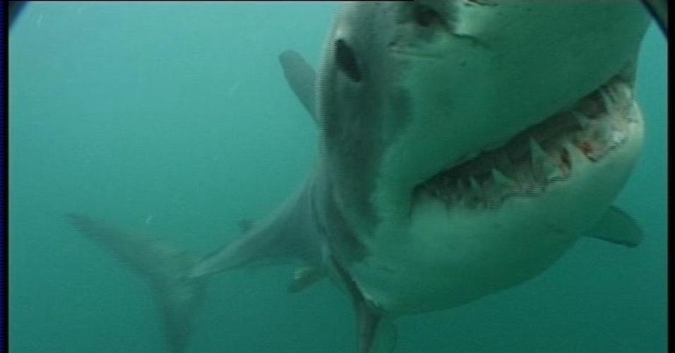 Tubarão branco fotografado a partir de uma das gaiolas que servem de proteção para turistas que fazem o mergulho na região da Cidade do Cabo