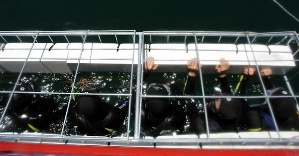 Turistas se amontoam em gaiola para ver de perto o grande tubarão branco nas águas da África do Sul