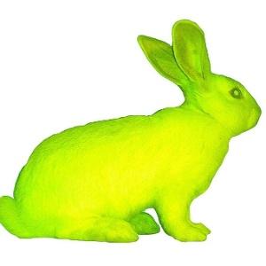"""Imagem de """"Alba"""", uma coelha transgênica verde fluorescente. """"Bioarte"""" do brasileiro Eduardo Kac - Divulgação"""