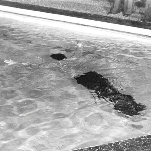 """Corpo boiando na piscina dá início à trama de """"O Rebu"""""""