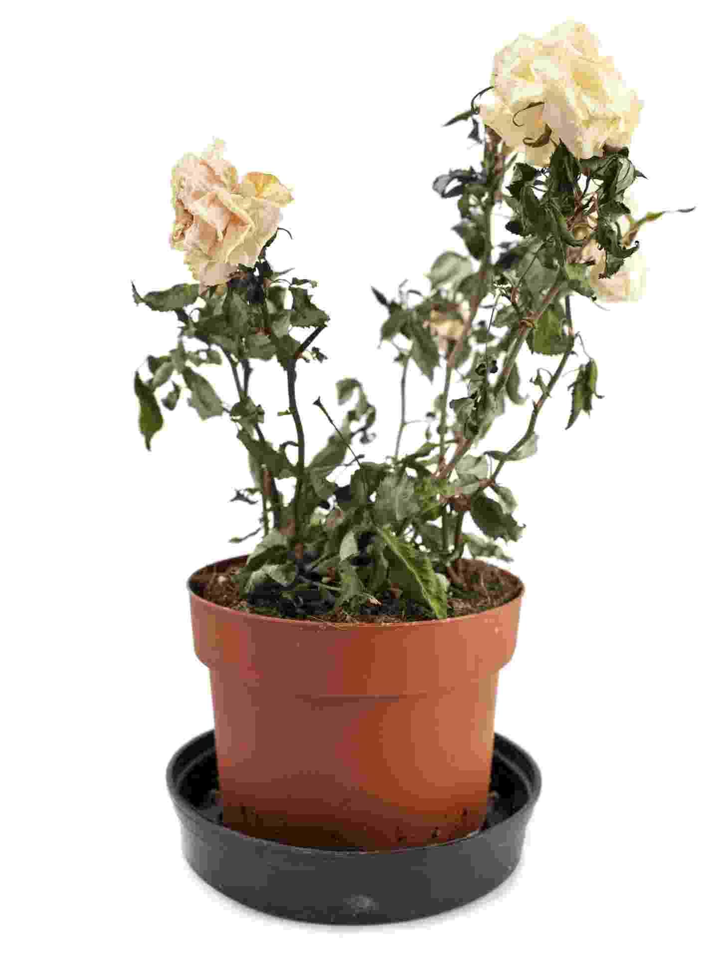 vaso com flores secas - Getty Images