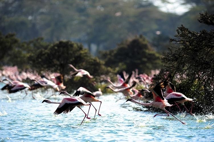 Lago Nakuru - Quênia