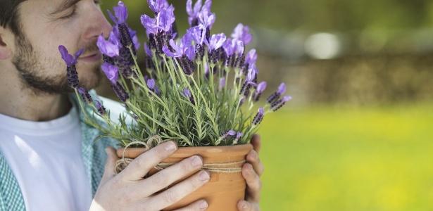 Lavandas são fáceis de ser cultivadas e podem ser plantadas em vasos - Getty Images