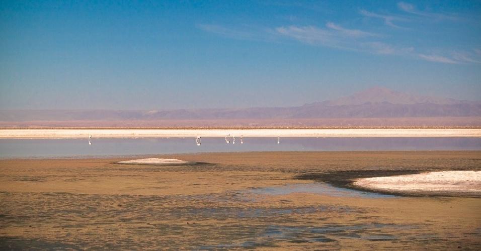 Flamingos são presença comum nos lagos da região do deserto do Atacama, no Chile