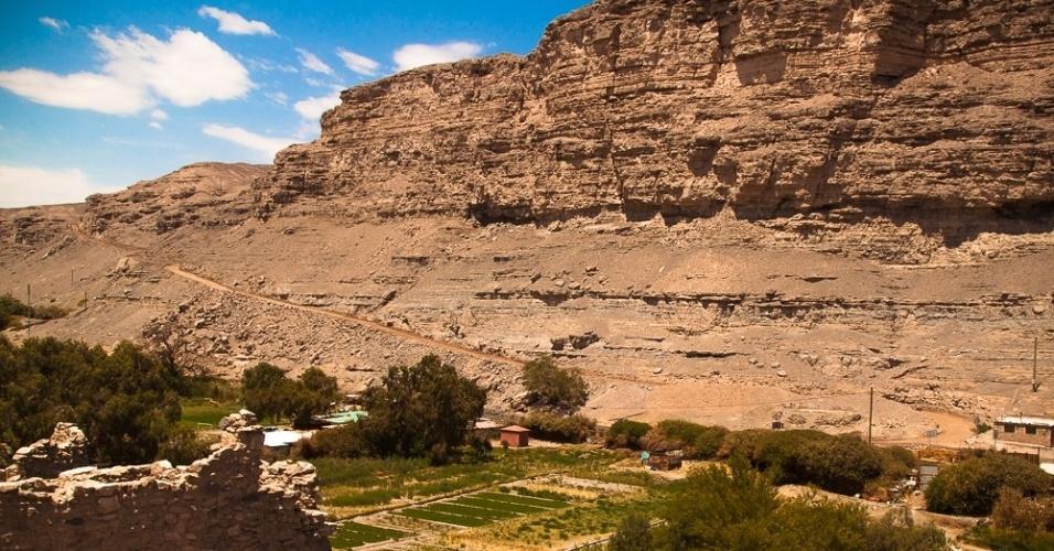Plantações na entrada do vilarejo de Lasana, no Chile