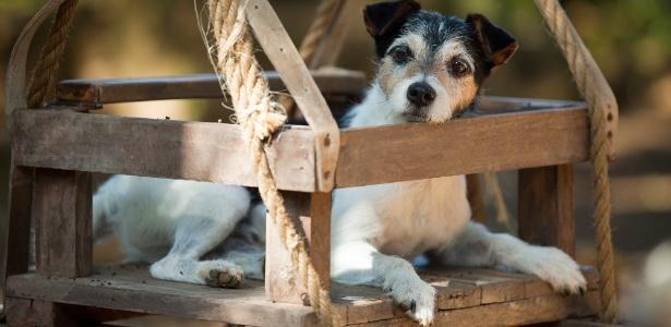 Cachorros são capazes de reconhecer a si mesmos, aponta estudo