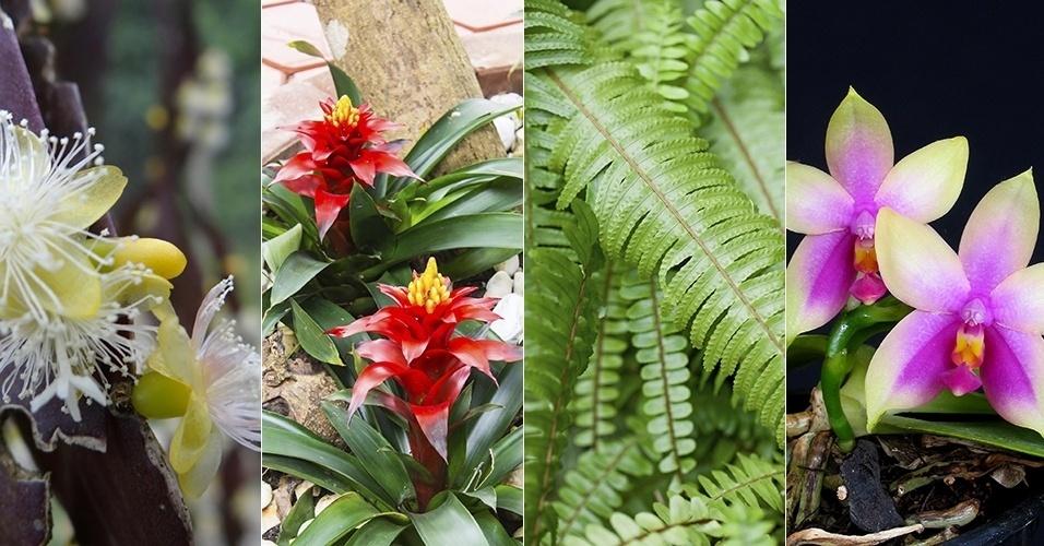 Resultado de imagem para Mostra de Orquídeas e Bromélias