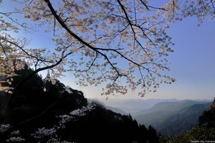 'Irmão japonês' do Caminho de Santiago atrai milhões de peregrinos