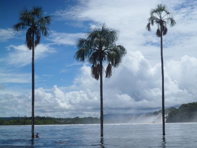 Turista nada próximo às árvores da lagoa Canaima