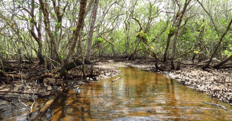 Entre as árvores e o oceano do Núcleo Picinguaba, em Ubatuba, o forasteiro pode entrar em contato direto com os principais ecossistemas da Serra do Mar, como restingas, matas de encosta, costões rochosos, manguezais (na foto) e planícies litorâneas