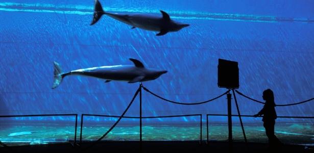 O aquário da cidade de Gênova tem cerca de 12 mil animais de 600 espécies