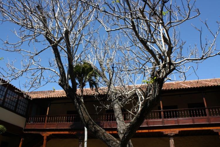 Nogueira, árvore da noz, no pátio interior da Casa de los Capitanes, em La Laguna; edifício abriga o centro de informação turística, onde é possível se inscrever para um tour guiado gratuito