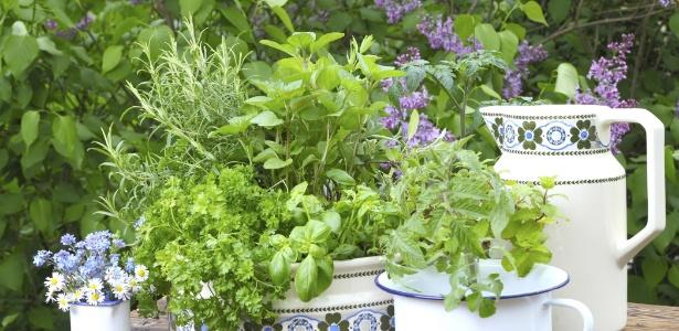 Ervas aromáticas frescas dão mais sabor à comida e perfumam e embelezam seu lar - Getty Images