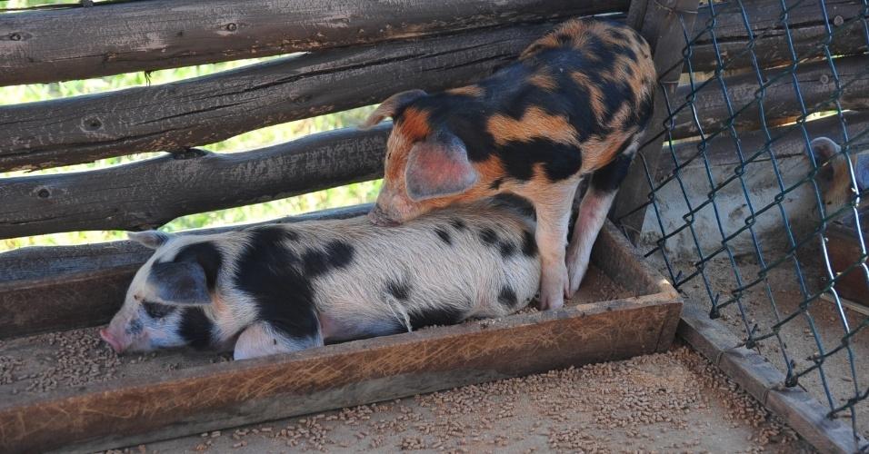"""14.set.2014 - Porcos na sede de """"A Fazenda 7"""""""