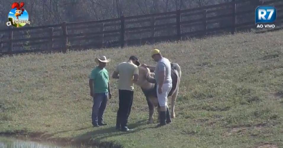 Com a ajuda do caseiro, Diego Cristo e Felipeh Campos conduzem o búfalo para o lago