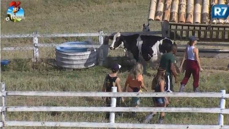 Durante passeio pela fazenda, peões observam a vaca
