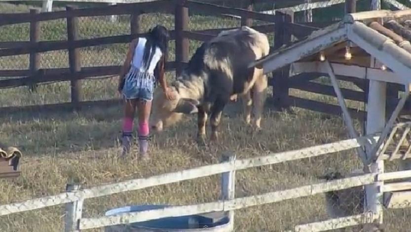 """Lorena Bueri acaricia o búfalo depois de receber instruções da zootecnista de """"A Fazenda 7"""" sobre a alimentação do animal"""