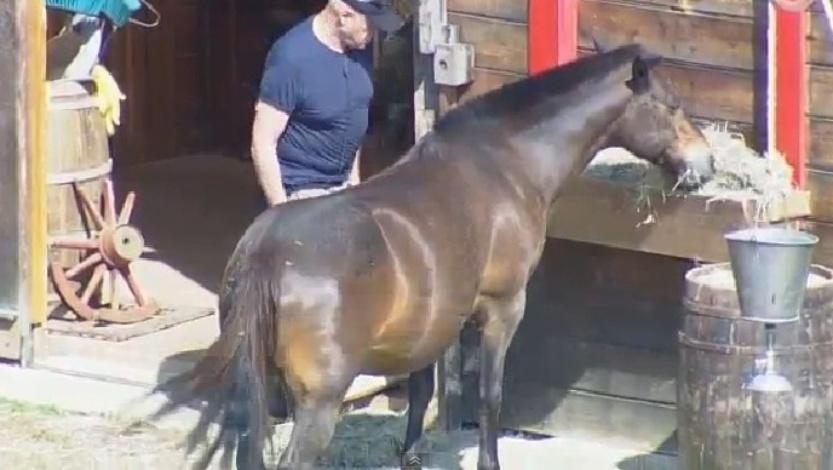 Oscar Maroni confere a alimentação do cavalo