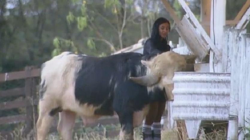 Lorena Bueri alimenta o búfalo enquanto o paparica com declarações de amor