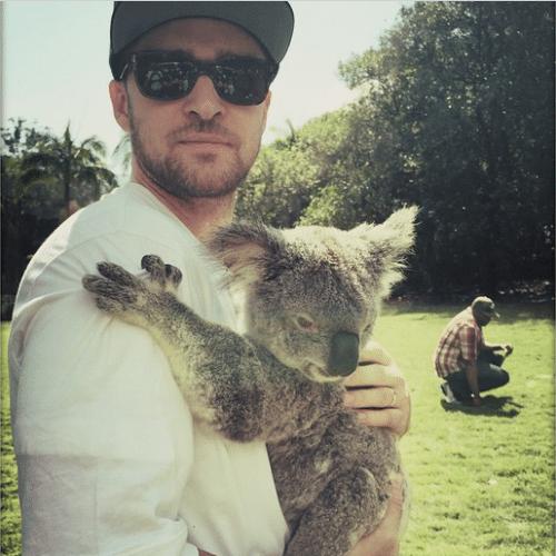 """25.set.2014 - Justin Timberlake postou uma foto com um coala durante passeio em um zoológico na Austrália. """"Está é a April. Muito agarrada"""", escreveu o cantor na legenda da imagem"""