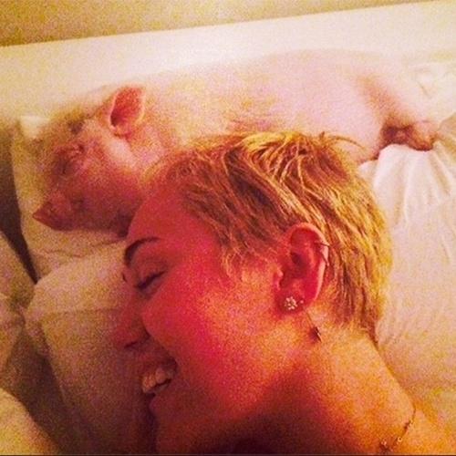 2.out.2014 - Miley Cyrus posta foto em que está deitada na cama com um porquinho. A cantora, que não escreveu nada na legenda da imagem