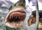 Na África do Sul, turista faz foto assustadora de tubarão-branco - Instagram/Amanda Brewer