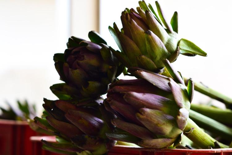 Alcachofras fazem sucesso nos pratos de São Roque. Durante a primavera, é possível comprar a planta in natura