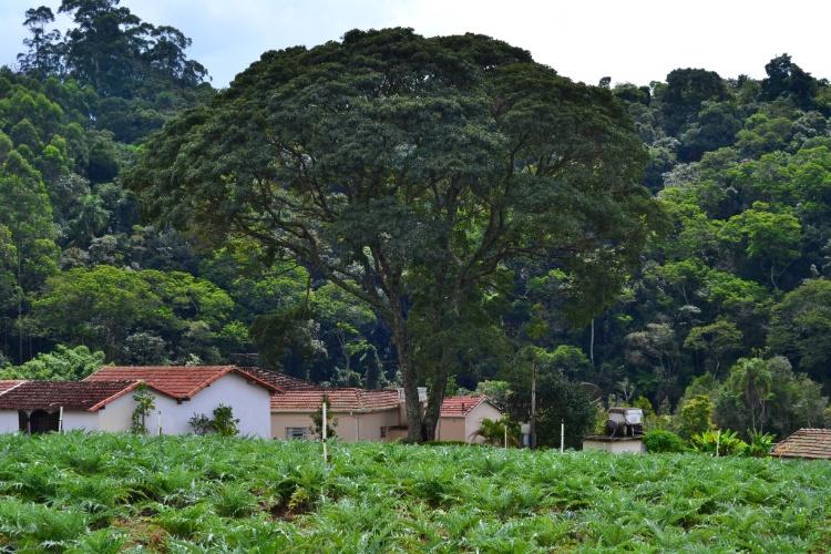 São Roque tem clima de interior e belas paisagens verdes