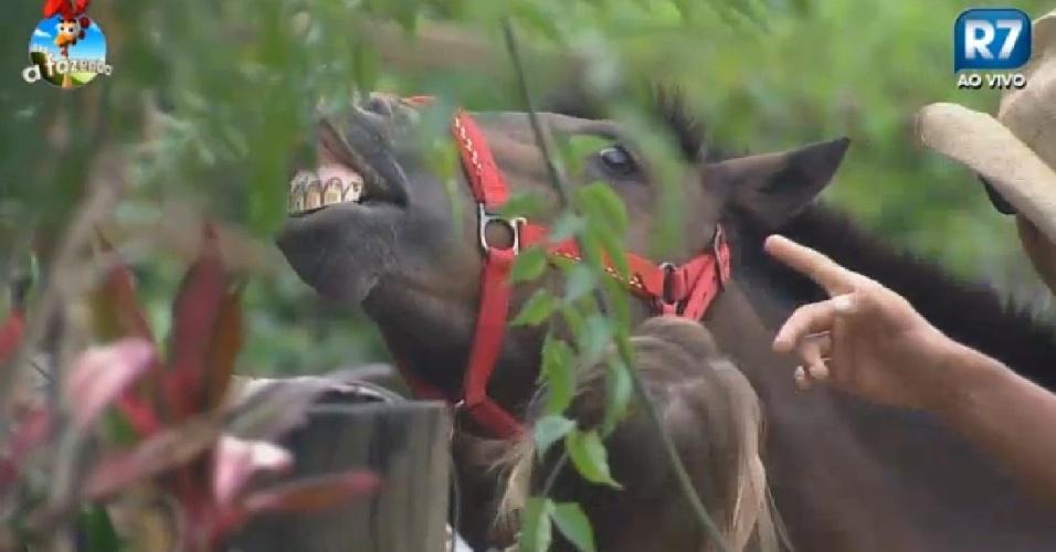 Égua dá sorriso para Pepê e Neném em