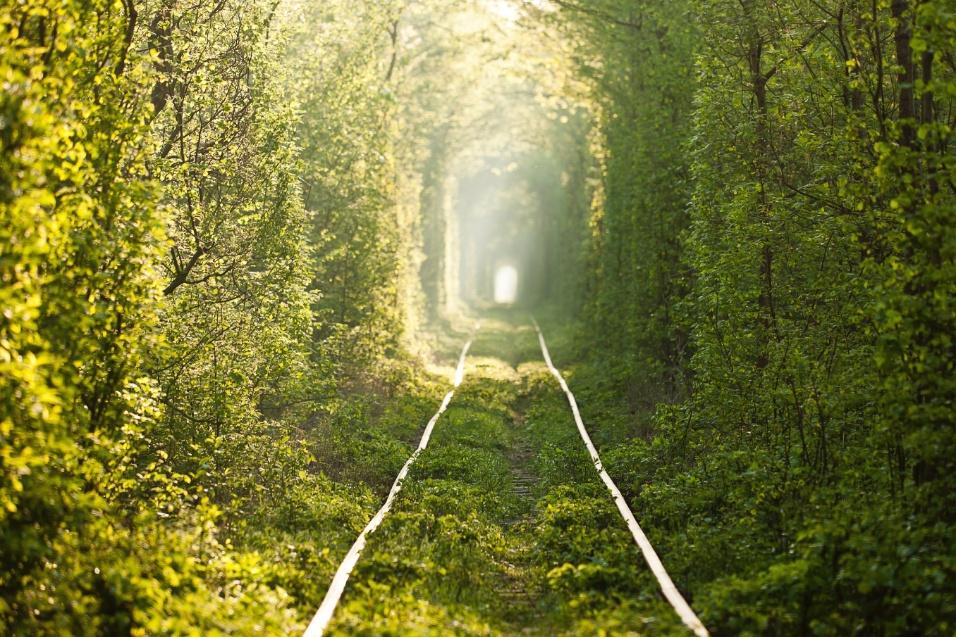 """Em determinadas épocas do ano, como a primavera e o outono do Hemisfério Norte, o """"túnel do amor"""" ganha iluminações fascinantes, ideias para passeios românticos"""