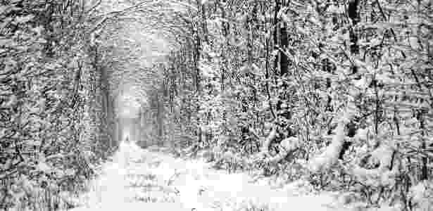 O túnel do amor é bonito até no gélido inverno ucraniano - Getty Images - Getty Images