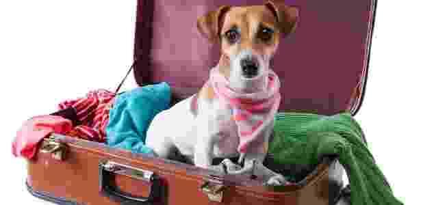 Cachorro em mala de viagem - Getty Images - Getty Images