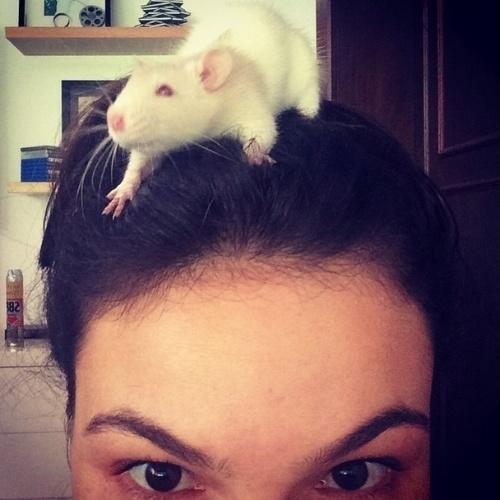 """10.fev.2015 - A atriz Ísis Valverde mostrou seu hamster de estimação. """"Bú!!! Ele tá crescendo!"""", comemorou a atriz em post no Instagram"""