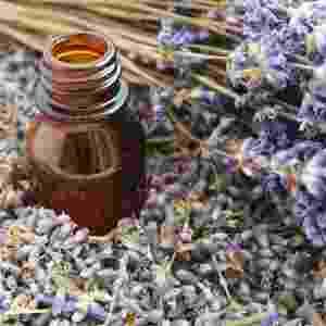 Lavanda (Lavendula augustifolia / Lavendula Officinatis / Lavendula vera) - Getty Images