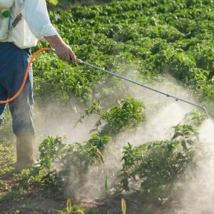 Especialista sugere priorizar o consumo de produtos orgânicos - Getty Images