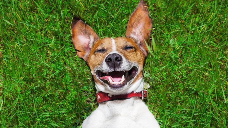 O adolescente queria ganhar um cachorro de estimação - Getty Images