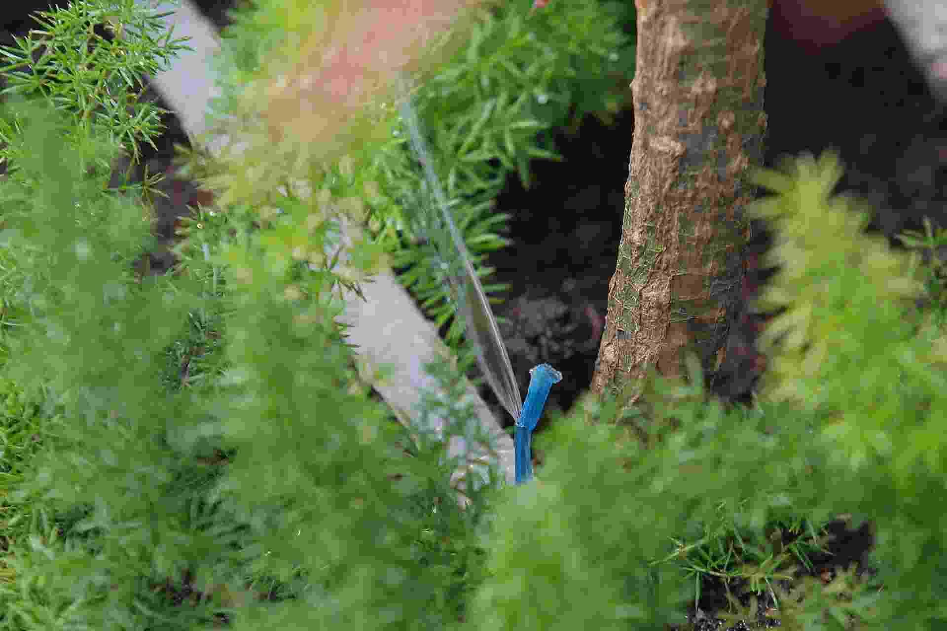 """Você adora plantas, mas sempre esquece de regá-las? Aprenda a fazer um gotejador para irrigar o jardim ou os vasos, que permite o controle do volume de água, evitando, assim, desperdícios e adequando a quantidade à demanda de cada espécie. O arquiteto e paisagista Ronaldo Kurita aprendeu com o avô a fazer um modelo composto por mangueira de jardim e tubinhos de hastes flexíveis. Ele topou dividir esse """"segredo de família"""" com o UOL Casa e Decoração. Faça um você também! - Reinaldo Canato/ UOL"""