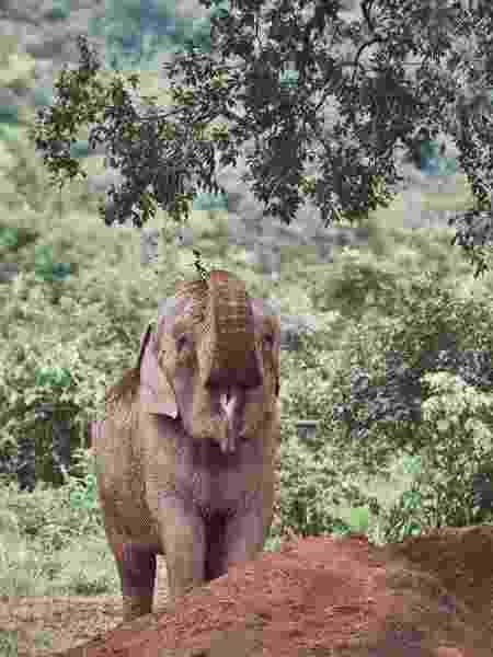 Os elefantes costumam jogar terra em si próprios para matar parasitas ou se refrescar - Sofía López Mañán/Divulgação - Sofía López Mañán/Divulgação