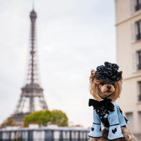 Lola, a yorkshire que conquistou a semana de moda parisiense - Reprodução/Instagram