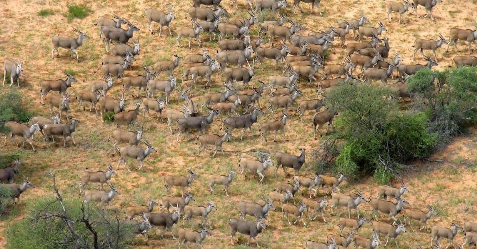 Primeiro parque de administração conjunta da África, Kgalagadi tem parte na Botswana e parte na África do Sul. Ele foi fundado como um símbolo de paz e é repleto de vida selvagem.