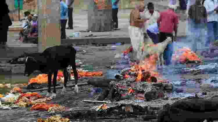 Na Índia, cadáveres são queimados entre vacas e meninos empinando pipas - Getty Images