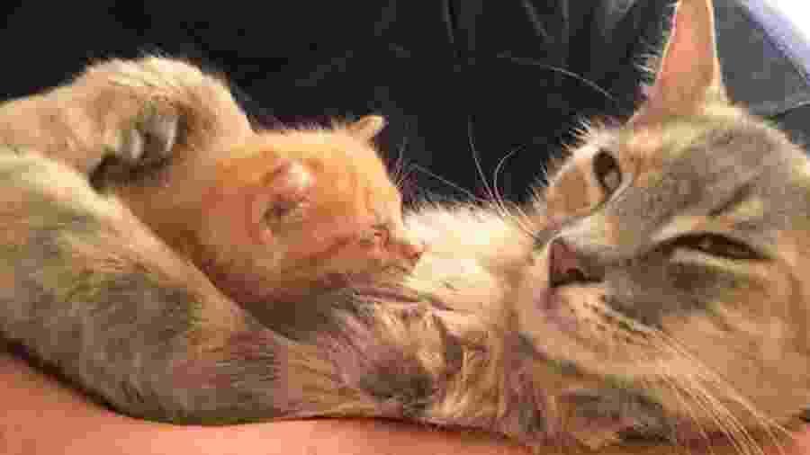 A torcida agora é para que a gata Ember seja adotada junto com o bebê Flame - Reprodução/The Dodo