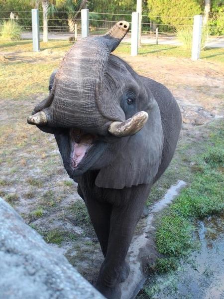 Ali, o elefante fujão - Reprodução