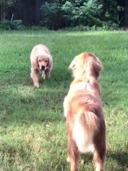 Os cães Axel e Diesel - Reprodução/Twitter