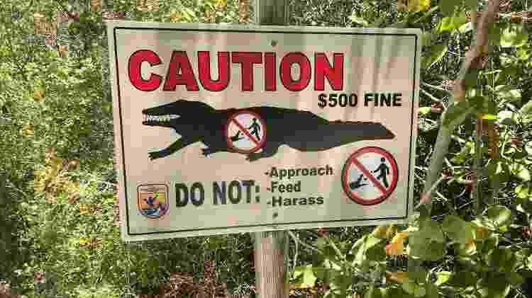 Placa avisa sobre multa para quem alimentar os enormes aligátores - Andrea Miramontes - Andrea Miramontes