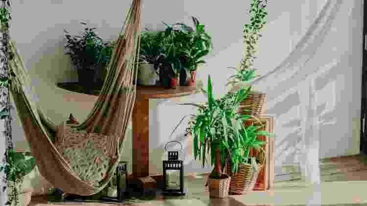 Planta permanecer bonita - Getty Images/iStockphoto - Getty Images/iStockphoto