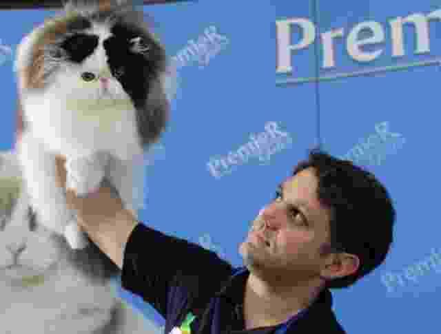 Criador orgulhoso apresenta seu gato Persa em evento do Clube Brasileiro do Gato - Divulgação / Silvia Pratta
