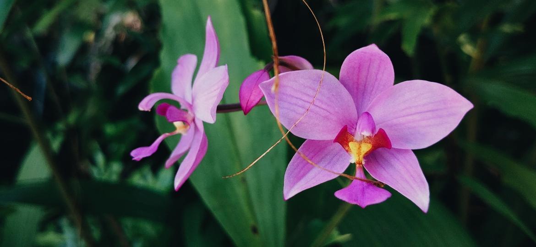 Orquídeas são cercadas de mitos sobre preço e cuidados, mas podem conquistar seu coração - e seu jardim - Unsplash