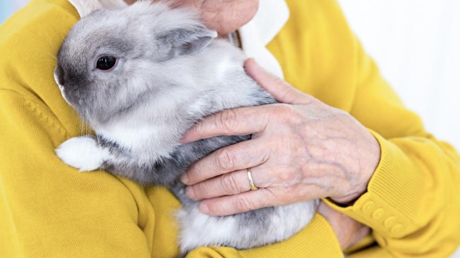 Animais podem ajudar no tratamento de diversas doenças - iStock