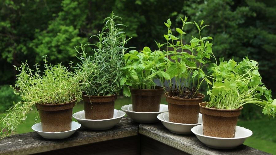 Que tal ter em casa opções de ervas para energizar os ambientes? - MichellePatrickPhotographyLLC/Getty Images/iStockphoto
